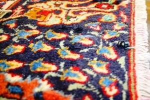 Teppich mit Mottenlöchern